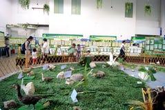 Shenzhen china: animal specimen exhibition Stock Image