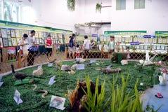 Shenzhen china: animal specimen exhibition Royalty Free Stock Photography