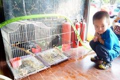 Shenzhen, China: bird and flower market Royalty Free Stock Photography