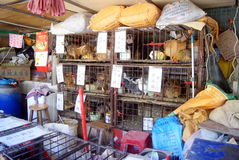 Shenzhen, china: chicken stalls Royalty Free Stock Images