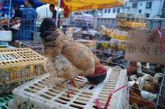 Shenzhen, China: Chicken stalls Stock Image
