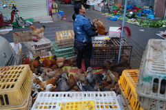 Shenzhen, China: Chicken stalls Stock Images