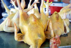 Shenzhen china: chicken stalls business flourishes Stock Image