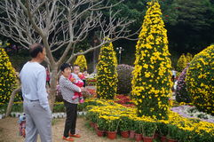 Shenzhen, China: Chrysanthemum exhibitions Stock Photography