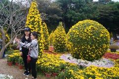 Shenzhen, China: Chrysanthemum exhibitions. Shenzhen Luohu East Lake Park, organized chrysanthemum exhibitions. Visitors to watch or take photographs Royalty Free Stock Photography