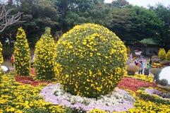Shenzhen, China: Chrysanthemum exhibitions. Shenzhen Luohu East Lake Park, organized chrysanthemum exhibitions. Visitors to watch or take photographs Stock Images