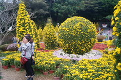Shenzhen, China: Chrysanthemum exhibitions. Shenzhen Luohu East Lake Park, organized chrysanthemum exhibitions. Visitors to watch or take photographs Royalty Free Stock Photo