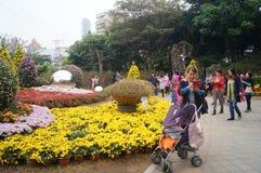 Shenzhen, China: Chrysanthemum exhibitions. Shenzhen Luohu East Lake Park, organized chrysanthemum exhibitions. Visitors to watch or take photographs Stock Image