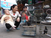 Shenzhen, China: dekorative Vögel Lizenzfreies Stockbild