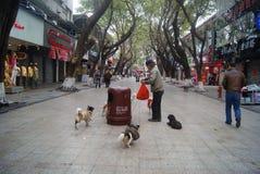 Shenzhen, China: der alte Mann und der Hund Stockfoto