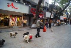 Shenzhen, China: der alte Mann und der Hund Lizenzfreie Stockfotos