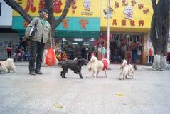 Shenzhen, China: der alte Mann und der Hund Stockfotos