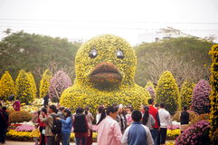 Shenzhen, China: Exposição do crisântemo Fotos de Stock