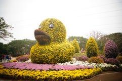 Shenzhen, China: Exposição do crisântemo Imagens de Stock