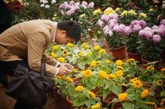 Shenzhen, China: Exposição do crisântemo Imagem de Stock