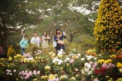 Shenzhen, China: Exposição do crisântemo Foto de Stock Royalty Free
