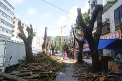 Shenzhen, China: felled trees Royalty Free Stock Image