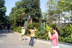 Shenzhen, china: green road landscape Royalty Free Stock Photography