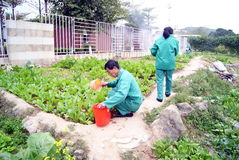 Shenzhen china: growing vegetables Stock Photos
