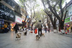 Shenzhen, China: the old man and the dog Royalty Free Stock Image