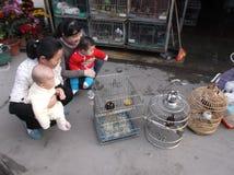 Shenzhen, China: ornamental birds Stock Photo