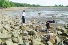 Shenzhen, China: os povos estão procurando caranguejos pequenos na praia Imagem de Stock