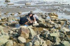 Shenzhen, China: os povos estão procurando caranguejos pequenos na praia Imagem de Stock Royalty Free
