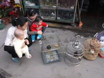Shenzhen, China: pájaros ornamentales Foto de archivo