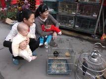 Shenzhen, China: pájaros ornamentales Foto de archivo libre de regalías