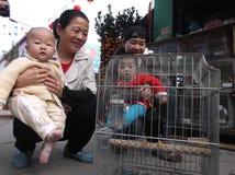 Shenzhen, China: pájaros ornamentales Fotografía de archivo