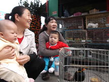 Shenzhen, China: pájaros ornamentales Fotografía de archivo libre de regalías