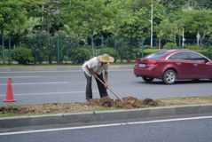 Shenzhen, China: planting trees Royalty Free Stock Images