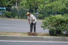 Shenzhen, China: planting trees Stock Image