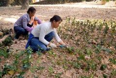 Shenzhen, china: planting trees Stock Photos