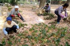 Shenzhen, china: planting trees Royalty Free Stock Photos