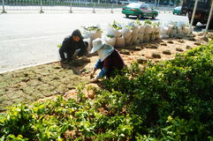 Shenzhen, China: planting trees and grass in the green belt Royalty Free Stock Photography