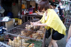 Shenzhen china: sales of poultry Royalty Free Stock Images