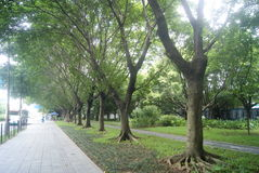 Shenzhen, China: sidewalks and green belt Stock Image