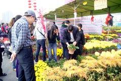 Shenzhen china: spring festival flower markets Royalty Free Stock Images