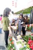 Shenzhen china: spring festival flower markets Royalty Free Stock Photography
