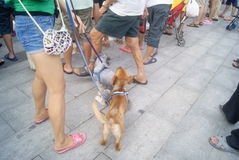 Shenzhen, China: in the square dog Stock Photo