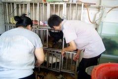 Shenzhen china: the supermarket chicken stalls Stock Photo