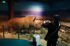 Shenzhen, China: wild animal specimen exhibitions. The Shenzhen Museum, the wild animal specimen exhibitions held. There are many kinds of wild animal, such as Stock Photography