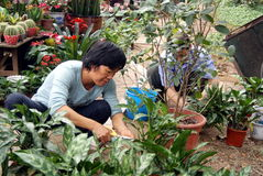 Shenzhen china: workers working in the garden Royalty Free Stock Photography