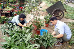 Shenzhen china: workers working in the garden Stock Image