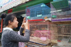Shenzhen, China: young women use the mobile phone to shoot the bird Royalty Free Stock Photography