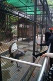 Shenzhen, China: zoo visitors Royalty Free Stock Photo