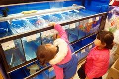 Shenzhen, Chiny: Centrów handlowych akwaria obrazy stock
