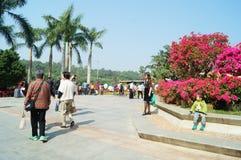 Shenzhen, Chiny: Lotosowy wzgórze parka krajobraz Zdjęcie Stock