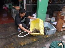 Shenzhen, Cina: alla pulizia dell'acquario della tartaruga Fotografia Stock Libera da Diritti